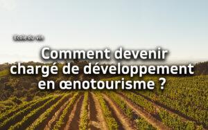 Comment devenir chargé de développement en œnotourisme ?
